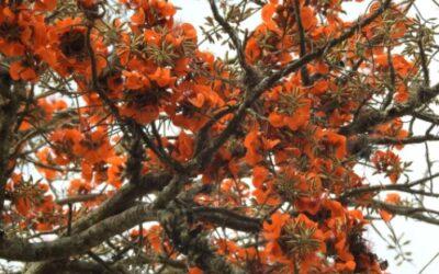 Árvores nativas endêmicas do Brasil que temos no Vale Verdejante